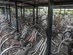 Abandoned bikes left behind after the Fukushima nuclear disaster Fukushima, Japan. Picture: Arkadiusz Podniesinski/REX Shutterstock /australscope