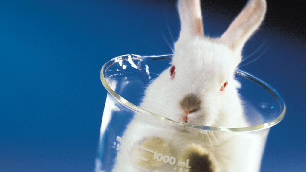 What is a good way to start an essay about animal testing for cosmetics?