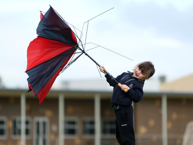 WILD: Tyndale Christian School reception student Megan Fechlie nearly got blown away while trying to cross the school oval. Picture: Tait Schmaal.