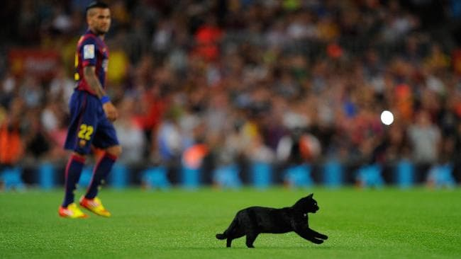 A cat invades the pitch at the start Barcelona's La Liga clash with Elche FC at Camp Nou.