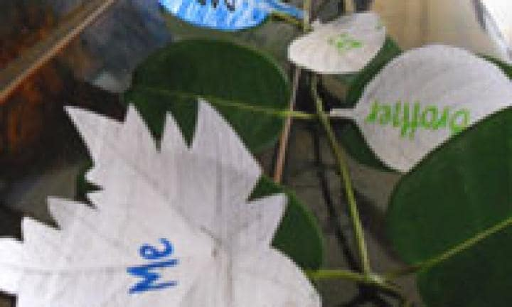 Make your own family tree-vine
