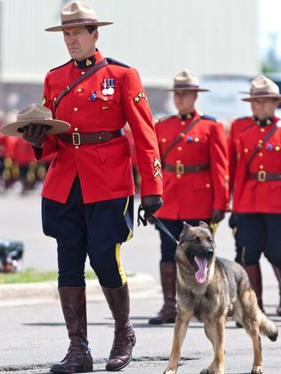 Whimpered throughout service ... Danny, the K9 partner of slain RCMP officer Constable Dave Ross.