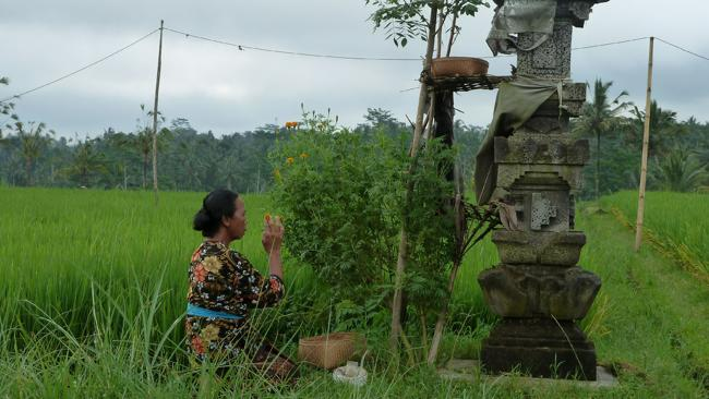 A woman praying in the fields near Ubud. Picture: Angela Saurine