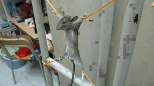 A man has posted this photo to Facebook of a mouse he says ate his wages.