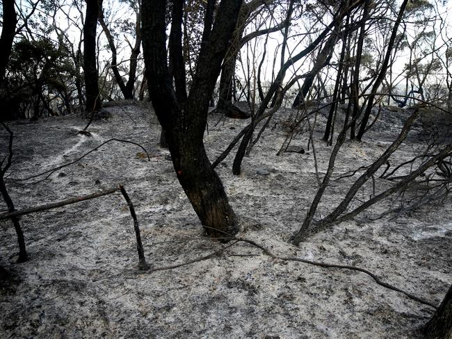 Destruction ... Burnt-out bushland at Beacon Hill today. Picture: John Grainger