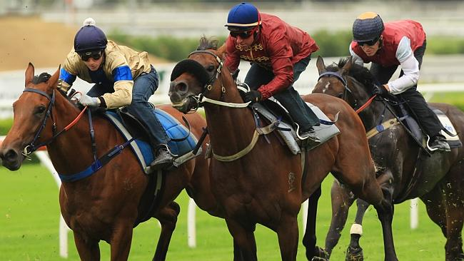 $20 million colt Zoustar is $2.90 to $2.75 with the TAB for the Canterbury Stakes. Pictur