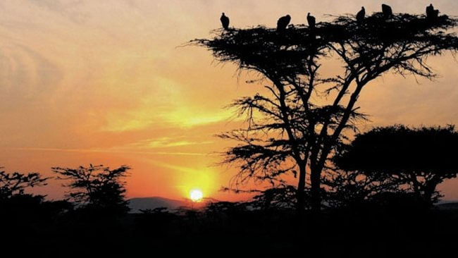 Kenyan dawn: ''This photo was taken in the Maasai Mara in September 2010, very early in the morning ... a beauitful sunrise with the added bonus of the vulture shadows.'' Picture:Jo Eastwood.