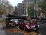 <p>Sandy tears up trees by their roots on New York City streets. Picture: Twitter</p>