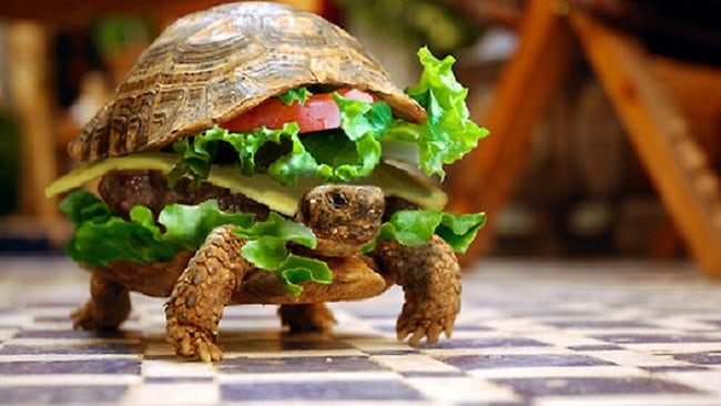 """This image from Flickr user """"flaunted"""" shows a different take on trying to disguise a turtle as a burger."""