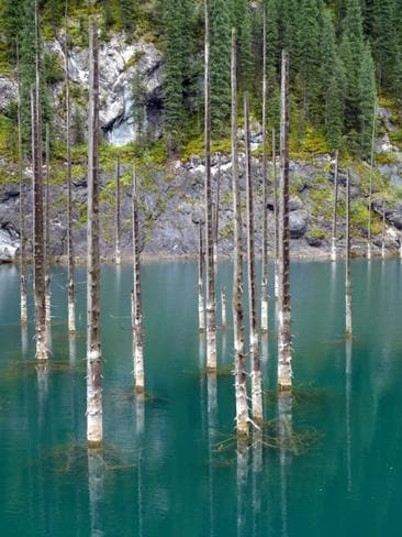 The sunken forest of Lake Kaindy. Picture: Exclusivepix