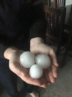 Giant hail in Blyth. Picture: Tanya Penna/Plains Producer Newspaper