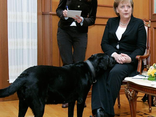 Ms Merkel doesn't appear as interested in Putin's pet as she is in the German leader.