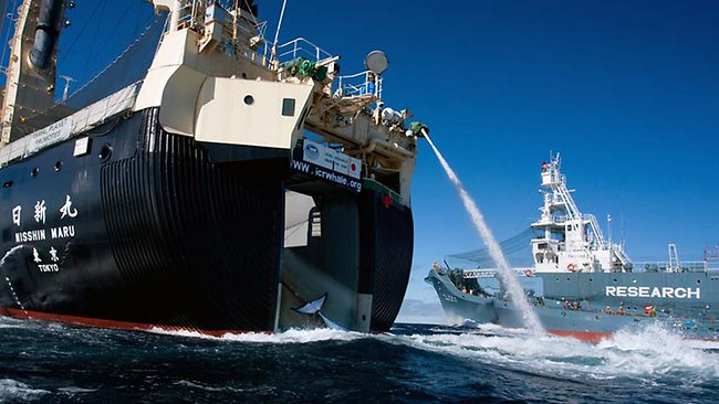 Japanese Whaling Ship Rams Sea Shepherd Protesters