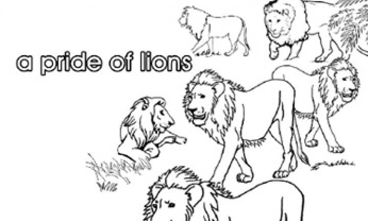 Collective nouns: A pride of lions