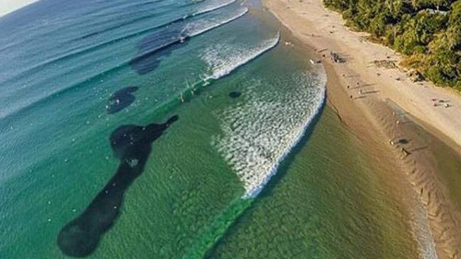 Bait fish swarm caught by drone gold coast bulletin for Drone surf fishing