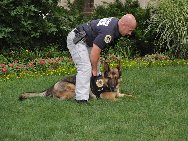 K-9 sniffer dogs let this bomb out of their sight. Picture: cwwycoff1.