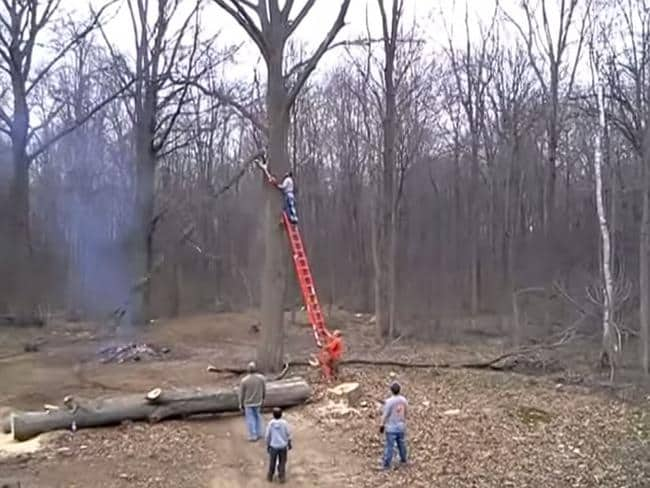 The branch goes down ... Picture: YouTube
