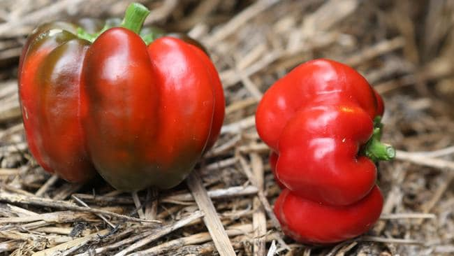 Red capsicum is low in calories.