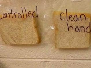 The slices of bread change over time, proving the importance of handwashing.