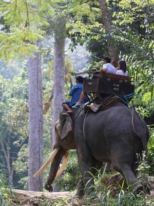 """Adventure Zosne offers tourists the opportunity to ride the elephants with each led by a """"professional Guide who is armed"""". Picture: World Animal Protecion/AFP"""