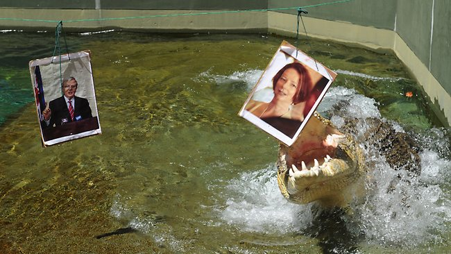 Harry The Psychic Croc picks the winner of Kevin v Julia part 2, at Crocosaurus cove. Picture: Katrina Bridgeford