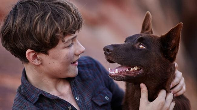 Return of Red Dog ... Rising star Levi Miller swaps Hugh Jackman for our nation's most famous canine in Red Dog: True Blue. (Roadshow)