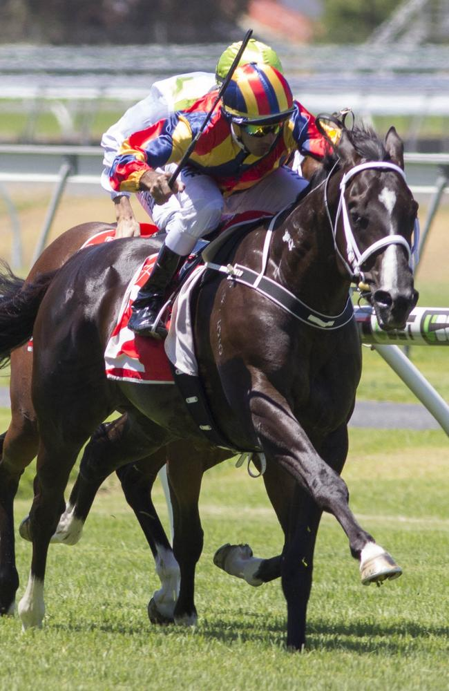 More Than Exceed wins at Morphettville. Picture: Atkins Photography
