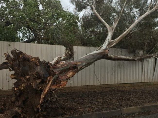 Trees were down in Port Pirie, SA, as the biggest storm in decades raged. Picture: Zoe Jackson