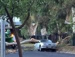 A car crushed by fallen gumtree branch. Picture: Jessica Robins