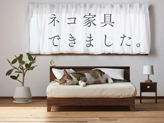 A super-chic collection of cat furniture by Japan's Okawa Kagu.