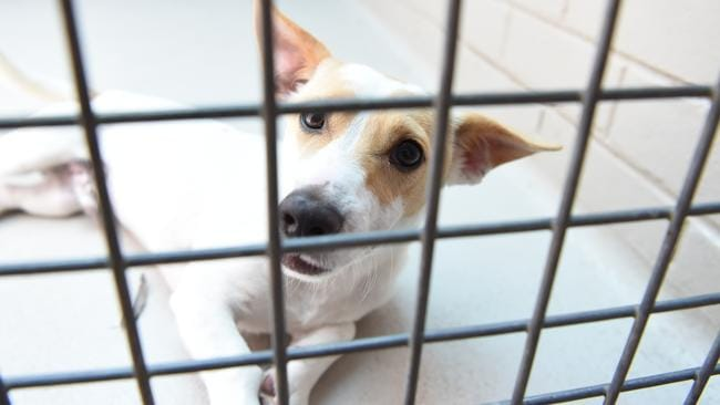 Rspca Townsville Dogs For Sale