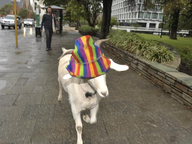 Gary takes a stroll through Perth in his stylin' hat. Picture: Theo Fakos