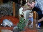 Baby Prince George looks on whilst meeting a Bilby called George at Taronga Zoo on April 20, 2014 in Sydney, Australia. Picture: Getty