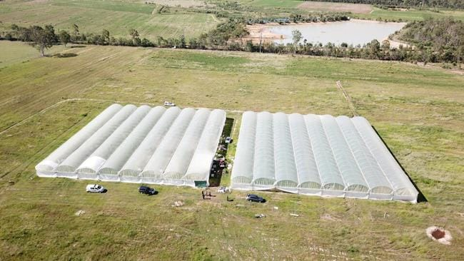 Queensland Police have seized 11,795 cannabis plants following a raid on an Esk property. Picture: Queensland Police