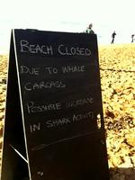 "<p>A sign alerts residents around Newport Beach of the whale and possible increase in shark activity. Picture: Supplied/ <a href=""https://twitter.com/702sydney/status/230441037380857856/photo/1"">twitter</a></p>  <p> </p>"
