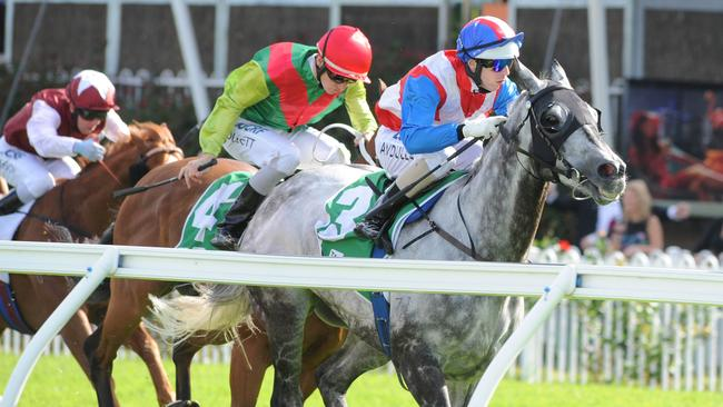 Grey eight-year-old Zaratone heads the weights for Saturday's Flying Welter at Rosehill with 61.5kg.