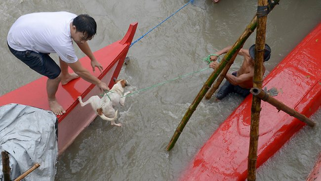 Residents rescue a dog carried away by floodwaters in the farming town of Novaleta, some 26 kilometres outside Manila on August 19.