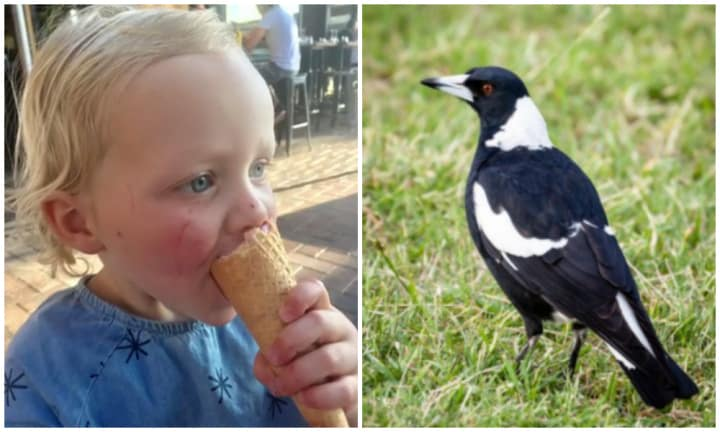 Mum's warning after toddler injured in 'unusual' magpie attack