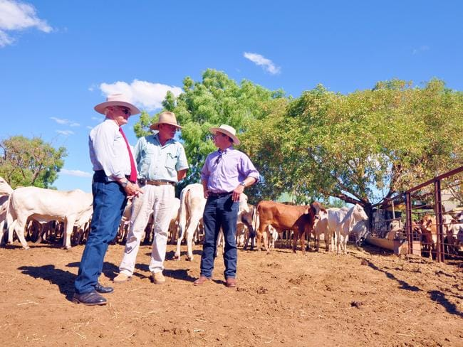 Bob Katter, pictured left with members of Australia's Katter Party Steve O'Connor and Robbie Katter, at a live cattle processing wharf in Karumba.