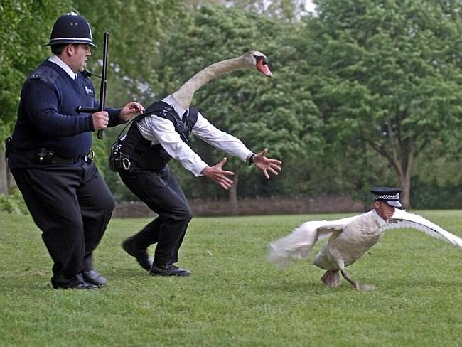 and finally ... Simon Pegg and a swan. A swan-Pegg.
