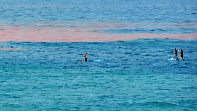 An Algal bloom has turned the sea pink at Torquay surf beach. Hot weather, Melbourne is expected to reach a top of 38 degrees.