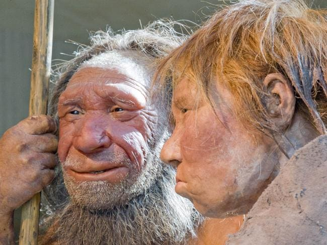 Neanderthal man, left, and woman at the Neanderthal museum in Mettmann, Germany.