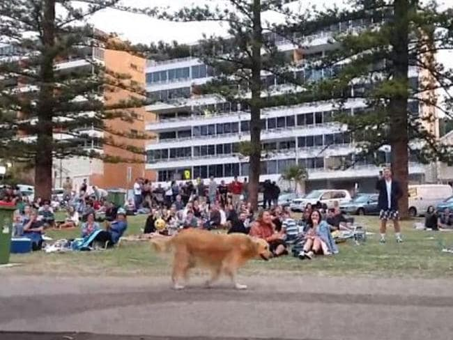 Disobedient Dog Plays Dead In Front Of Large Crowed And - Dog learns to play dead so he doesnt have to leave the park