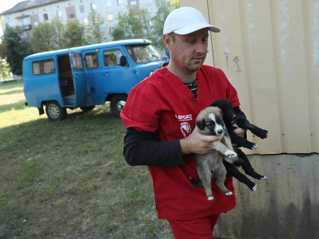 "Pavel ""Pasho"" Burkatsky, a professional dog catcher from Kiev, releases stray puppies that have been neutered and vaccinated inside the exclusion zone next to workers' dormitories near the Chernobyl nuclear power plant. Picture: Getty Images"