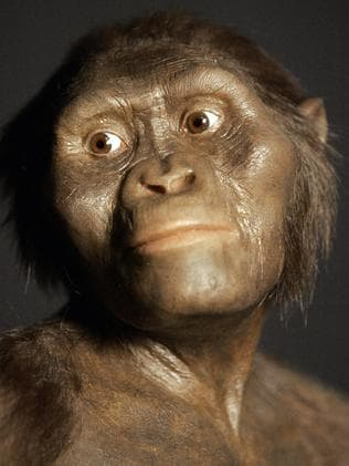 3D model of the early human ancestor. Picture: Pat Sullivan