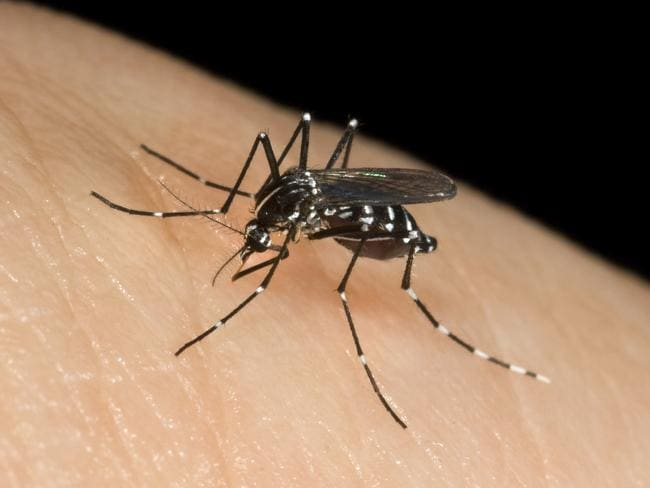 Brace for mosquito madness. Picture: Supplied.