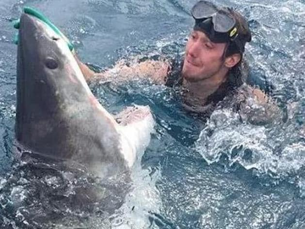 Moment diver 'confronted' by shark
