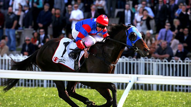 Pierro will be chasing his first win against older horses today. Picture: Damian Shaw