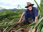 Gordonvale cane farmer Jeff Day is counting the cost of Cyclone Ita after significant damage to his crop. He has about 450 acres.