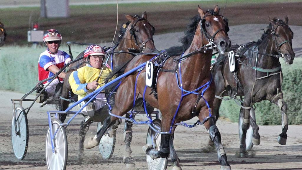 Lennytheshark is second favourite for the Inter Dominion. Picture: Stuart McCormick